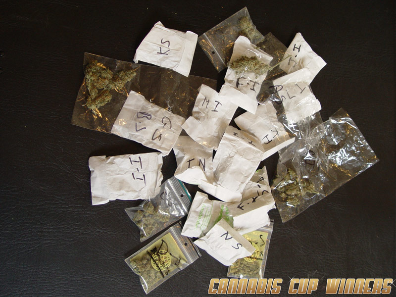 Cannabis Cup entries