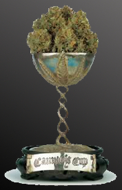 1998 11th cannabis cup